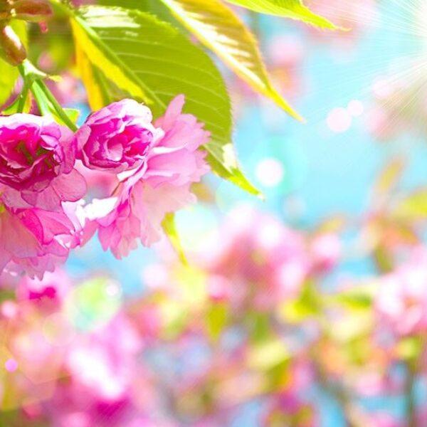 Gergi Tavan / Çiçek Görselleri